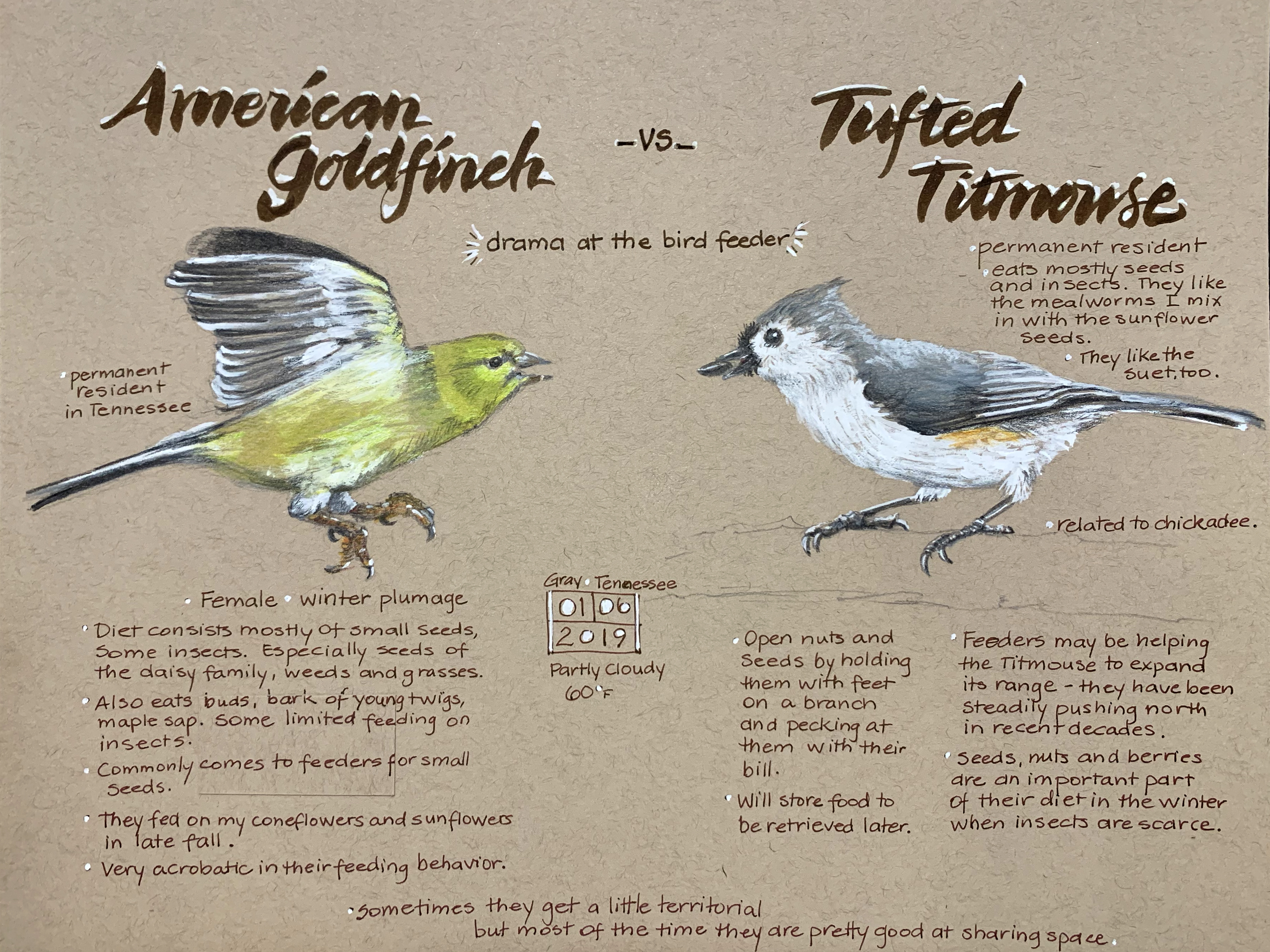 Goldfinch-Titmouse-02